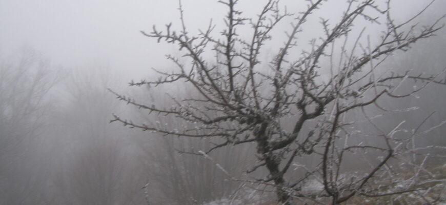 Погода на Ай-Петри 11 февраля 2020