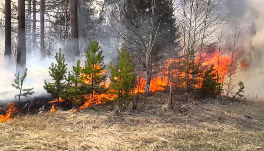 В Крыму установлен летний пожароопасный сезон